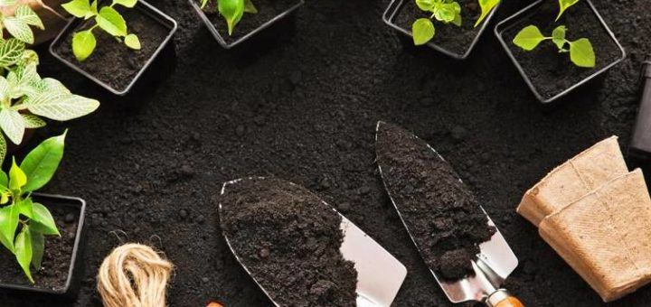 tutoriales de jardineria